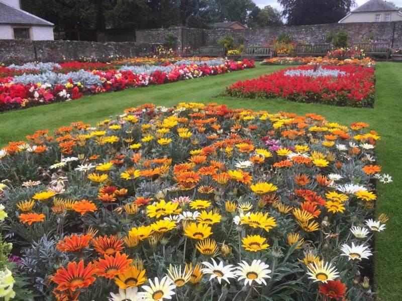 Melrose-flower-garden
