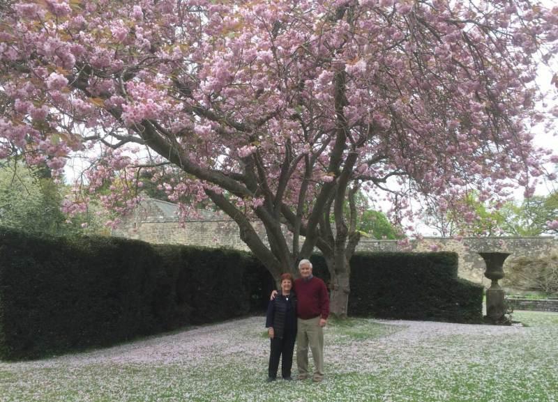 Falkland-Palace-gardens-cherry